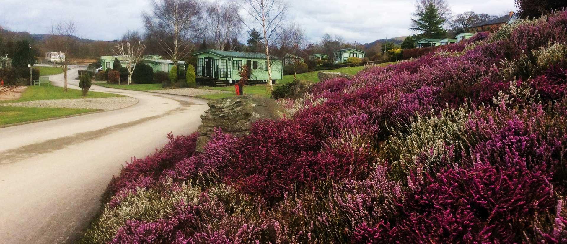 Glandulas Caravan Park-heather